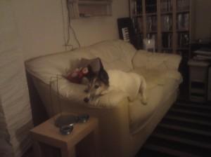 Viggo in his new sofa